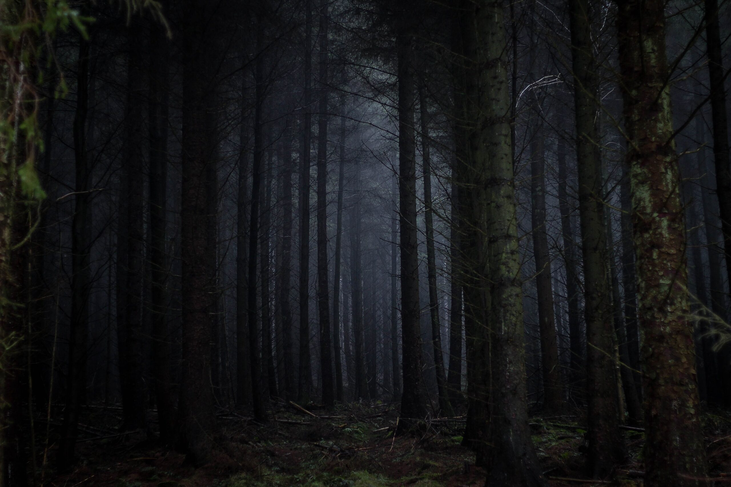 forest-night